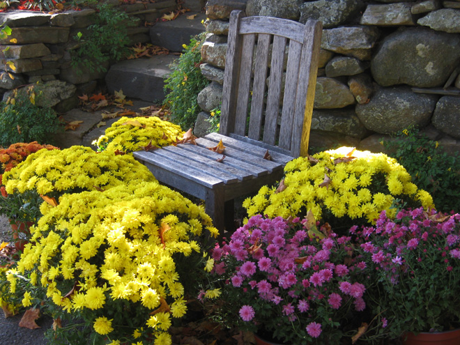 Chairs and Mums