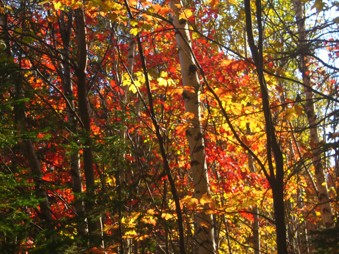 Perfect Light, Four Seasons Trail, Madawaska, Maine