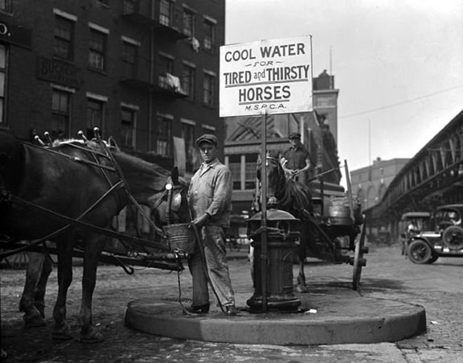A Horse drinks from an MSPCA Fountain (1922)