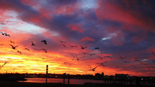 """The Birds at Dusk"", view of downtown New Bedford Waterfront"